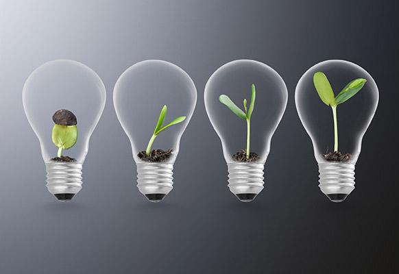 plant growing in lightbulb